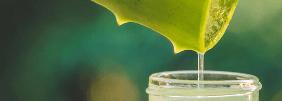 Naturkosmetik: alles, was Sie darüber wissen müssen